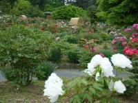 2018-05-13花と泉の公園-牡丹園086