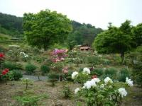 2018-05-13花と泉の公園-牡丹園093