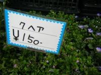 21回大船渡椿祭り2018-03-10重箱石220