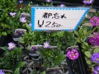 21回大船渡椿祭り2018-03-10重箱石219