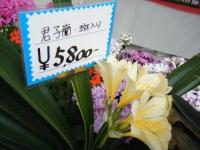 21回大船渡椿祭り2018-03-10重箱石225