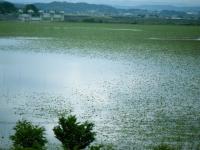 2018-06-16登米市南方花菖蒲の郷-しろぷーうさぎ019