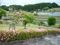 2018-06-16登米市南方花菖蒲の郷-しろぷーうさぎ036