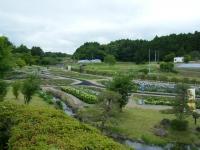 2018-06-16登米市南方花菖蒲の郷-しろぷーうさぎ041