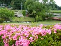 2018-06-16登米市南方花菖蒲の郷-しろぷーうさぎ038