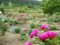 2018-05-13花と泉の公園-牡丹園097