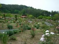 2018-05-13花と泉の公園-牡丹園106