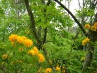 2018-05-13花と泉の公園-牡丹園103