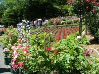 2018-06-09花巻薔薇園069