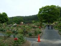 2018-05-13花と泉の公園-牡丹園116