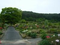 2018-05-13花と泉の公園-牡丹園115