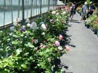 2018-06-09花巻薔薇園073