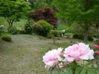 2018-05-13花と泉の公園-牡丹園128