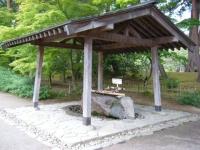 2018-06-30平泉-毛越寺アヤメ祭り-しろぷーうさぎ005