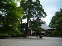 2018-06-30平泉-毛越寺アヤメ祭り-しろぷーうさぎ010