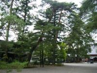 2018-06-30平泉-毛越寺アヤメ祭り-しろぷーうさぎ008