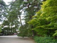 2018-06-30平泉-毛越寺アヤメ祭り-しろぷーうさぎ007