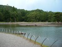 2018-06-30平泉-毛越寺アヤメ祭り-しろぷーうさぎ023