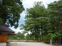 2018-06-30平泉-毛越寺アヤメ祭り-しろぷーうさぎ020