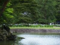 2018-06-30平泉-毛越寺アヤメ祭り-しろぷーうさぎ033