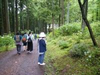 2018-07-08舞川紫陽花園ー重箱石001