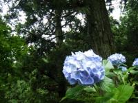 2018-07-08舞川紫陽花園ー重箱石036