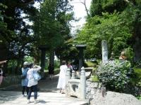 2018-07-14重箱石しろぷーうさぎ・中尊寺ハス祭り004