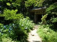 2018-07-14重箱石しろぷーうさぎ・中尊寺ハス祭り016
