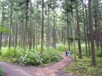 2018-07-08舞川紫陽花園ー重箱石040