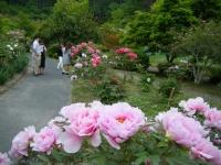 2018-05-13花と泉の公園-牡丹園136