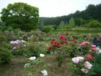 2018-05-13花と泉の公園-牡丹園133