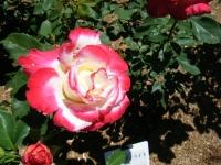 2018-06-09花巻薔薇園098