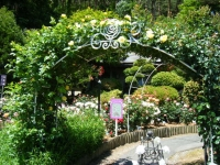 2018-06-09花巻薔薇園104