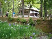 2018-06-30平泉-毛越寺アヤメ祭り-しろぷーうさぎ063