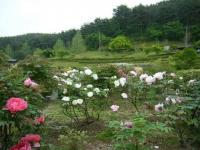 2018-05-13花と泉の公園-牡丹園148
