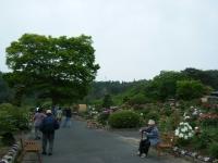 2018-05-13花と泉の公園-牡丹園152