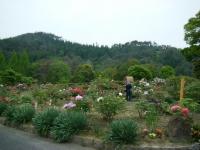 2018-05-13花と泉の公園-牡丹園151