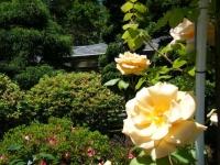 2018-06-09花巻薔薇園112