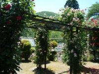2018-06-09花巻薔薇園119
