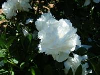 2018-06-09花巻薔薇園118