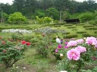 2018-05-13花と泉の公園-牡丹園161