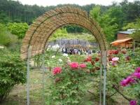 2018-05-13花と泉の公園-牡丹園158