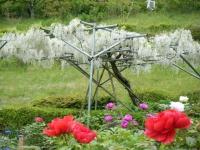 2018-05-13花と泉の公園-牡丹園168