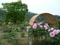 2018-05-13花と泉の公園-牡丹園166