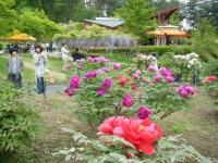 2018-05-13花と泉の公園-牡丹園163