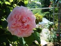 2018-06-09花巻薔薇園124