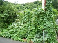 2018-08-06しろぷーうさぎ-重箱石03