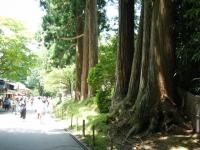 2018-07-14重箱石しろぷーうさぎ・中尊寺ハス祭り063