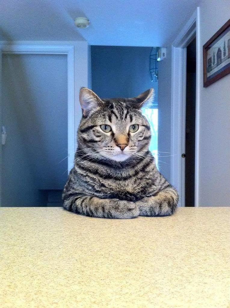 意識高い猫