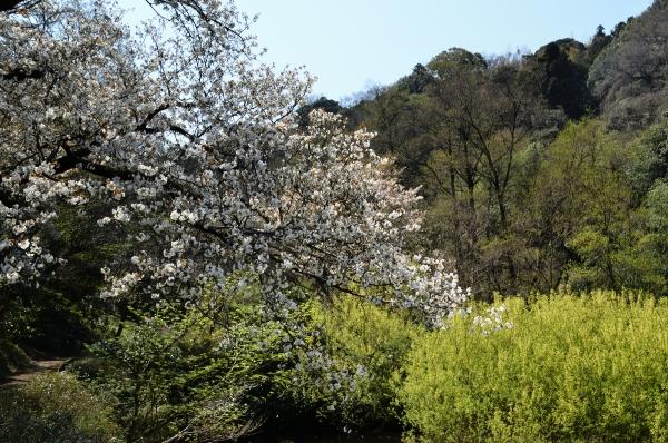 鎌倉山12